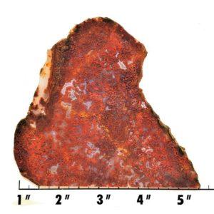 Slab1135 - Bloody Basin Agate Slab