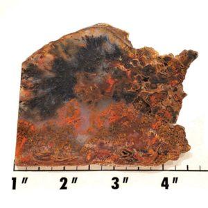 Slab1460 - Canadian River Plume Agate Slab