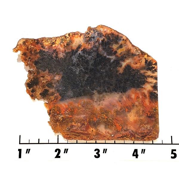 Slab1461 - Canadian River Plume Agate Slab
