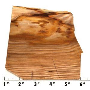 Slab1822 - Opalized Wood Slab