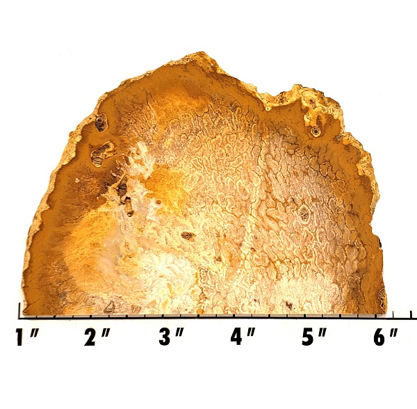 Slab687 - Fossil Fern Slab