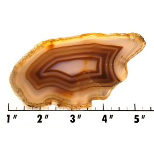 Slab886 - Brazilian Agate Slab