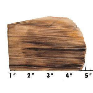 Slab60 - Opalized Wood Slab