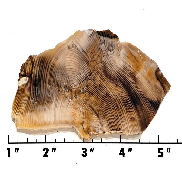 Slab616 - Opalized Wood Slab