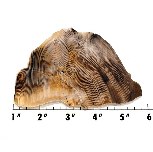 Slab61 - Opalized Wood Slab