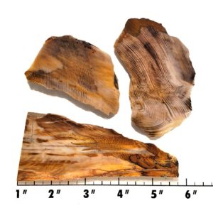 Slab627 - Opalized Wood Slab