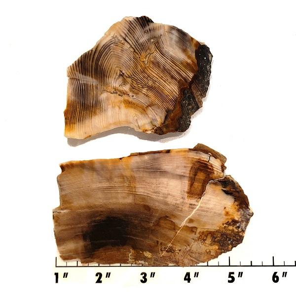 Slab630 - Opalized Wood Slab