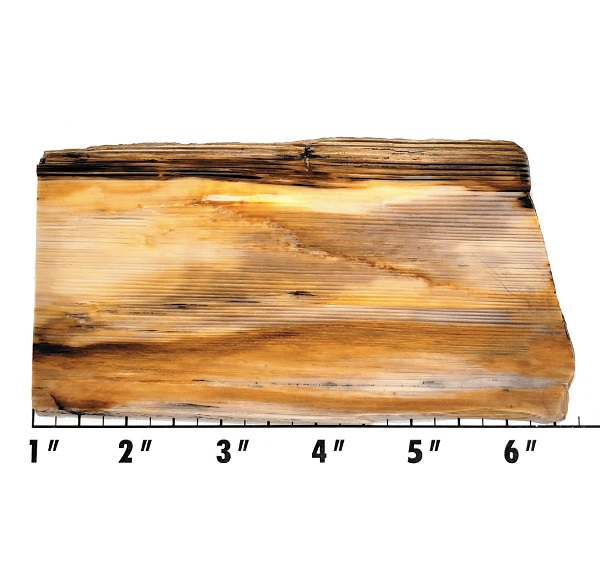 Slab458 - Opalized Wood Slab