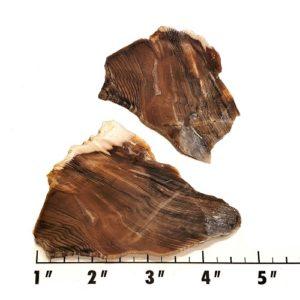 Slab507 - Opalized Wood Slab