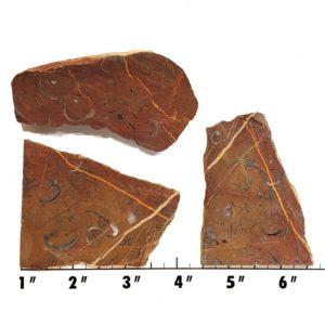 Slab1116 - Clam Chowder Stone Slabs