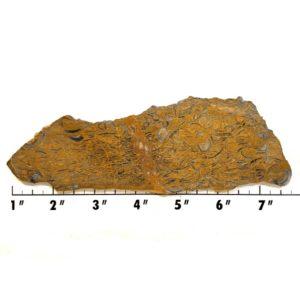 Slab1133 - Clam Chowder Stone Slabs
