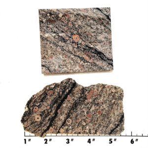Slab302 - Crinoid Marble Slabs