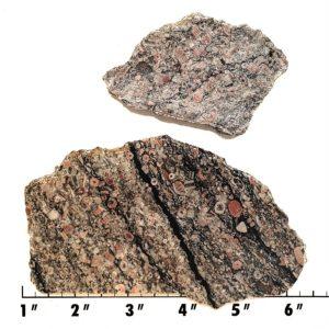 Slab303 - Crinoid Marble Slabs
