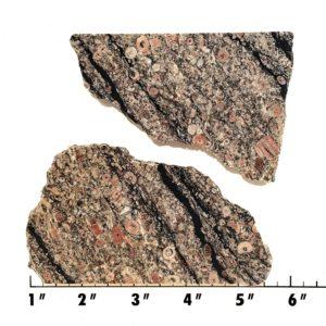 Slab306 - Crinoid Marble Slabs