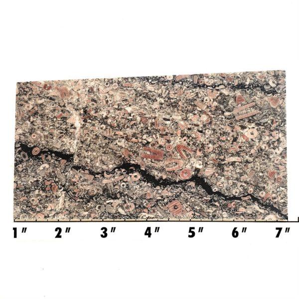 Slab332 - Crinoid Marble Slab