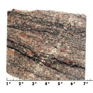 Slab335 - Crinoid Marble Slab