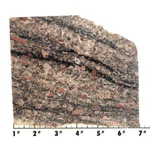 Slab338 - Crinoid Marble Slab