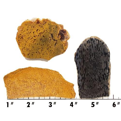 Slab659 - Petrified Palmwood Slabs
