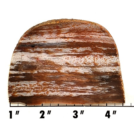 Slab666 - Petrified Palmwood Slab