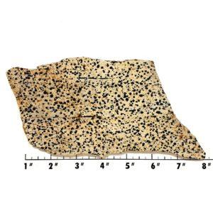 Slab840 - Dalmation Stone Slab