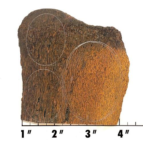 Slab845 - Dinosaur Bone Slab