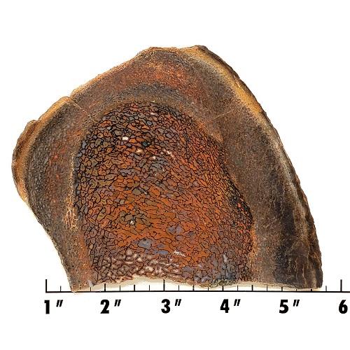 Slab850 - Dinosaur Bone Slab