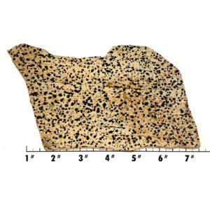Slab890 - Dalmation Stone Slab