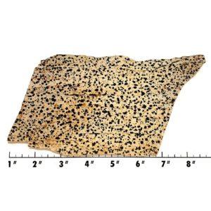 Slab898 - Dalmation Stone Slab