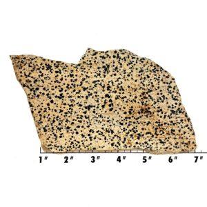 Slab903 - Dalmation Stone Slab