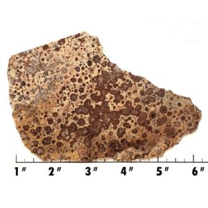 Slab986 - Asteroid Jasper Slab