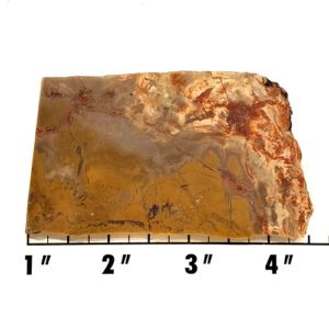 Slab1338 - Coprolite (Fossilized Dinosaur Dung) Slab