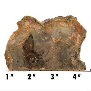 Slab1472 - Coprolite (Fossilized Dinosaur Dung) Slab