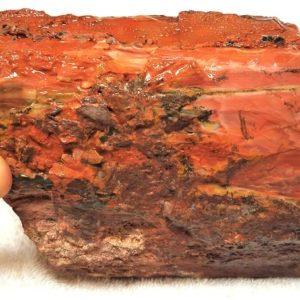Petrified Wood Rough 2