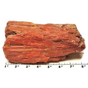 Petrified Wood Rough 3
