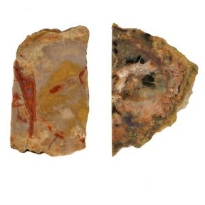 Coprolite Slabs from the Colorado/Utah border area