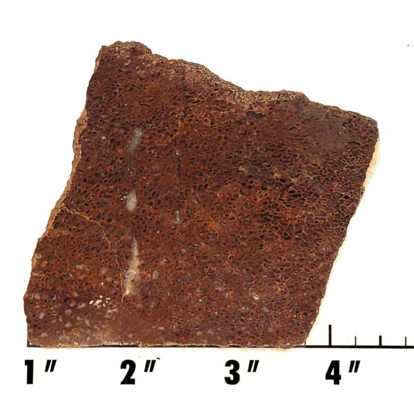 Slab1421 - Dinosaur Bone slab