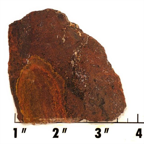 Slab1429 - Dinosaur Bone slab