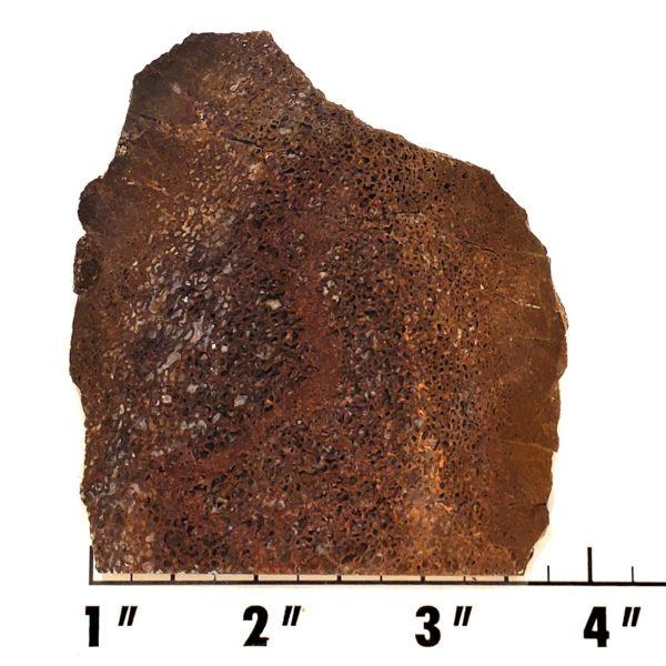 Slab1430- Dinosaur Bone Slab