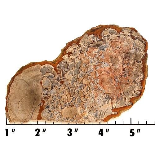 Slab452 - Mushroom Rhyolite Slab