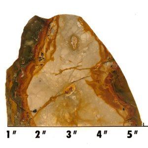 Slab914 - Rocky Butte Jasper
