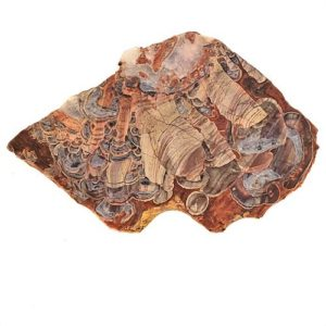 Mushroom Rhyolite Slabs - from Arizona
