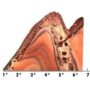 Slab861 - Apache Sage Rhyolite (Mimbres Valley Rhyolite) Slab