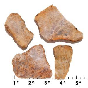Slab1161 - Sagenite Agate Slabs