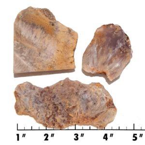 Slab1332 - Sagenite Agate Slabs