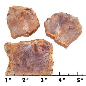 Slab1353 - Sagenite Agate Slabs
