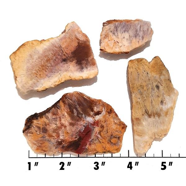 Slab1389 - Sagenite Agate Slabs