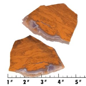 Slab446 - Oregon Landscape Jasper Slabs
