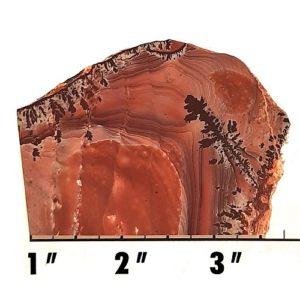 Slab971 - Apache Sage Rhyolite