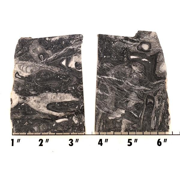 Slab1266 - Fossil Stone Slabs