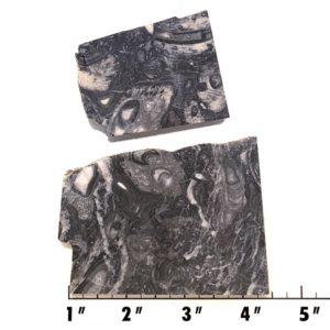 Slab1261 - Fossil Stone Slabs